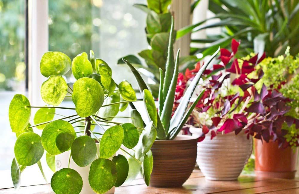 Горячий душ для растений