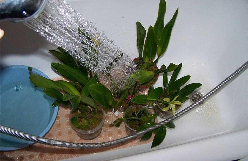 Как делать горячий душ для комнатных растений