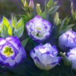 Какие цветы похожи на эустому?