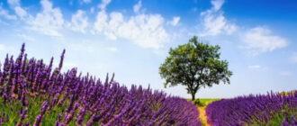 Красивое поле