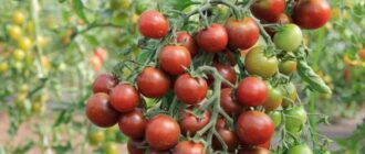 Коктейльные томаты